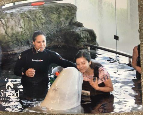 Beluga encounters at the Shedd Aquarium